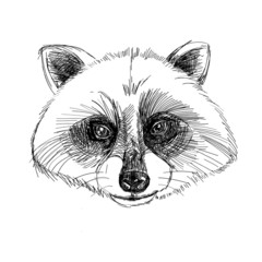 Handmade vector illustration of raccoon head