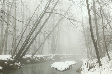river flowing through the forest on a foggy winter morning