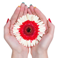 Woman hands holding a flower isolated on white