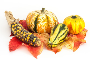 Zierkürbisse, ornamental or decorative gourd