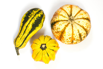 Zierkürbisse, ornamental or decorative gourd