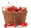Cherry berries in basket isolated on white