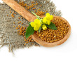 Mustard seeds in wooden spoon with mustard flower isolated