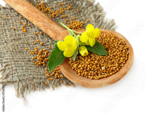 Foto op Aluminium Kruiden 2 Mustard seeds in wooden spoon with mustard flower isolated