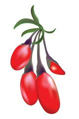 Goji Berries (Wolfberries)