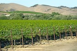 Organic Vineyards