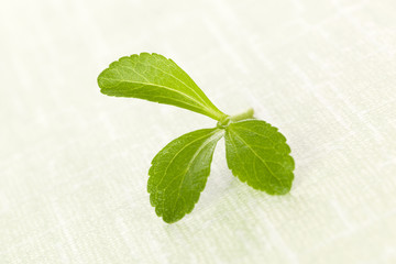Stevia sugarl leaf.