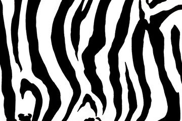animal zebra  background