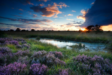 storm at sunset over swamp with flowering heather