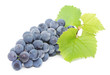 blue grape with green leaves