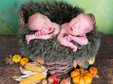 Newborn twins in autumn basket