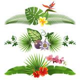 Fototapety Tropical borders