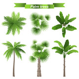 Fototapety palm trees