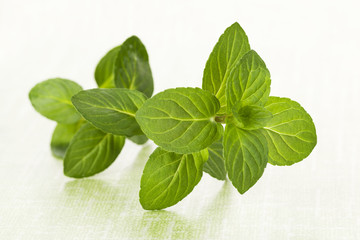 Mint leaves on green background.
