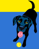 Black Labrador Retriever playing fetch poster