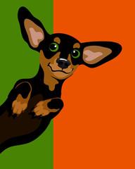 Funny illustration of a dachshund wiener dog