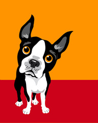 funny illustration of Boston Terrier © TeddyandMia