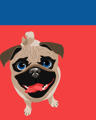 Funny illustration of a Pug dog © TeddyandMia