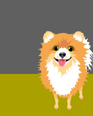 Illustration of Happy Pomeranian