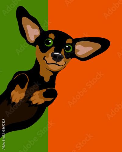 smieszna-ilustracja-jamnika-wiener-pies