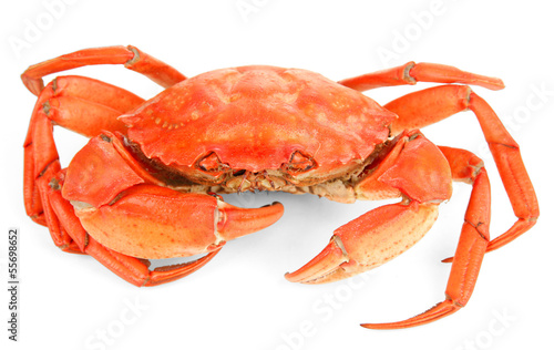 Boiled crab isolated on white © Africa Studio