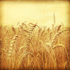 Grunge style photo of wheat field.