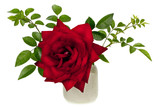 """""""Ena Harkness"""" minimalistic wet  red rose"""