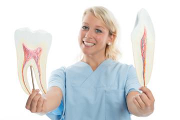 Zahnärztin erklärt Zahnaufbau