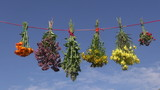 summer medical herb bunches on string and sky background