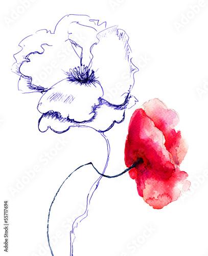 Poppy flowers © Regina Jersova