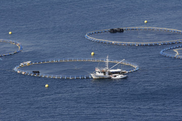 Cages for tuna farming in Adriatic sea in Croatia