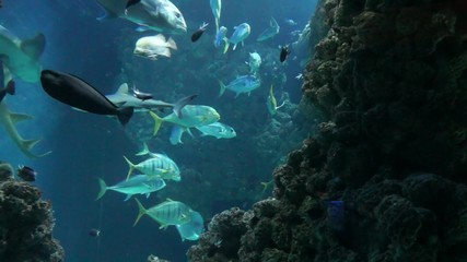 Tropical fish in blue deep water