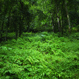 Green nature background. Jungle tropical forest wild landscape