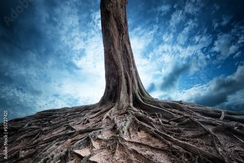 Scenic background of old tree and roots at night moon light mag