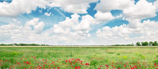 beautiful wheat field and blue cloudy sky