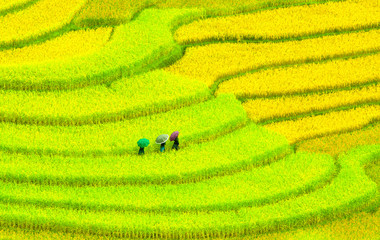 Three women visit their rice fields in Mu Cang Chai