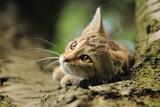 cat - 55729021