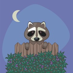 Cute Raccoon over somebody's fence