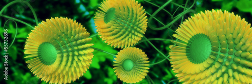 yellow flowers 3d panorama
