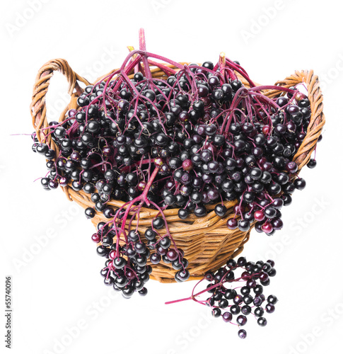 black elder - herb in a basket