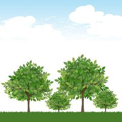 木 風景 空 Trees on lush green and blue sky