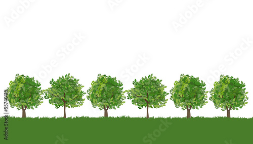 木 風景 Line of trees on lush grass