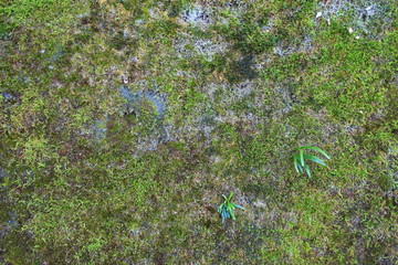 Green Moss  Seamless Tileable Texture