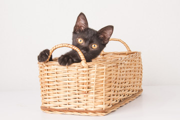 kitten inside basket