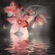 Obrazy na płótnie, fototapety, zdjęcia, fotoobrazy drukowane : Orchids with a butterfly on the coloured background