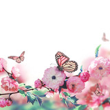 Pink flower of an Oriental cherry and butterfly; © seqoya