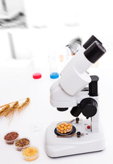 Seed subject to selection in Microbiological laboratory