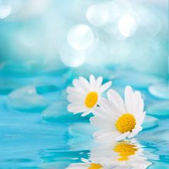 Spa Hintergrund - Blüten im Wasser