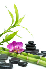 purple orchid with bamboo and black stones - white background