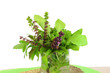 fresh herb in glass